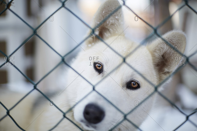 Close-up portrait of dog looking through chainlink fence during winter