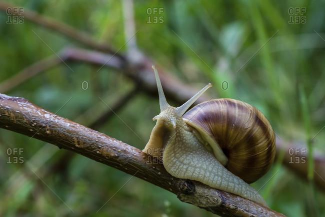 Close-up of snail on plant stem