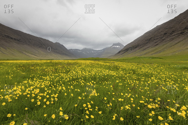 Flowers growing on field amidst mountains against cloudy sky
