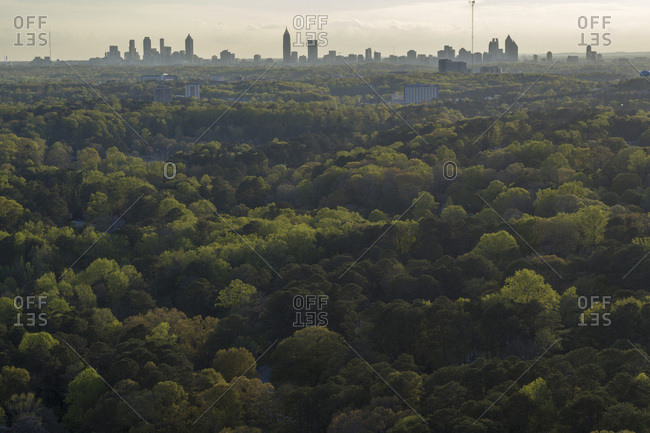 Tree Canopy, Decatur, Downtown Atlanta, Georgia
