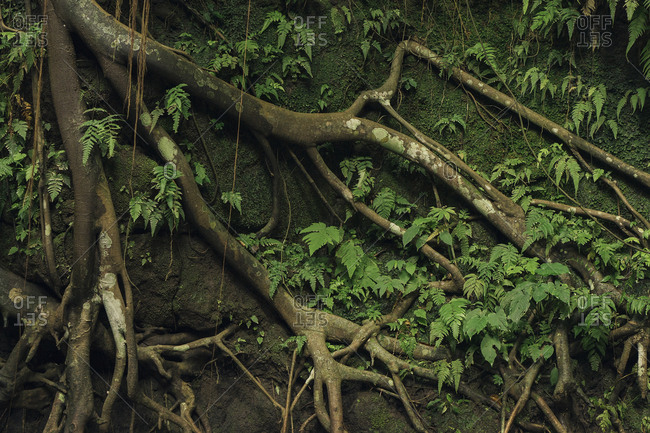 High angle view of moss and plants growing by roots in forest