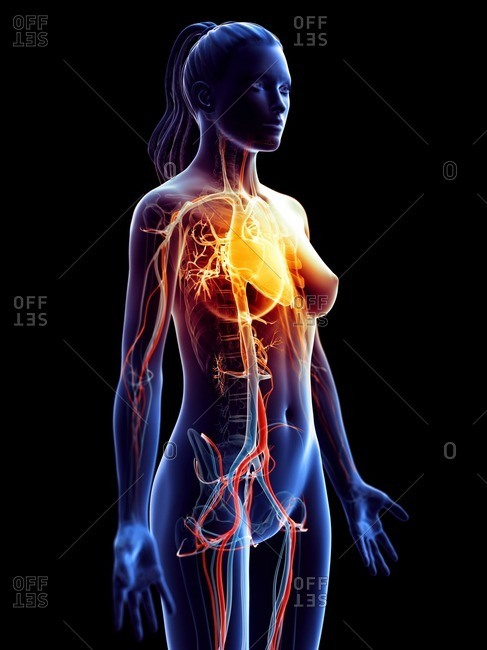 Heart disease, conceptual computer illustration.