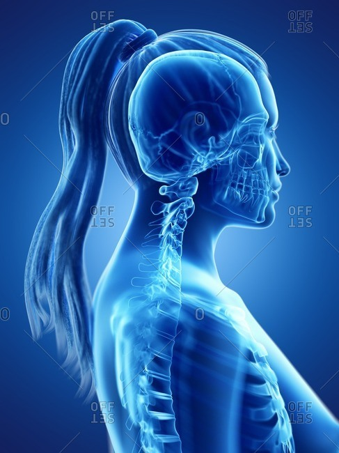 3d rendered medically accurate illustration of a woman's skeletal neck