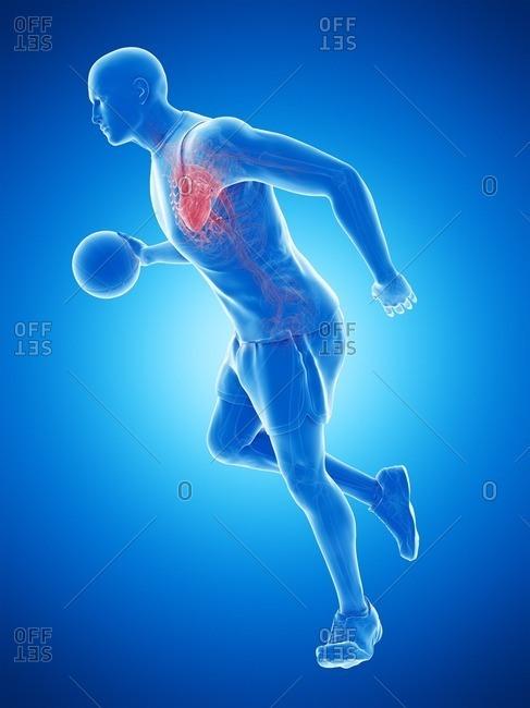 Basketball player's heart, computer illustration.