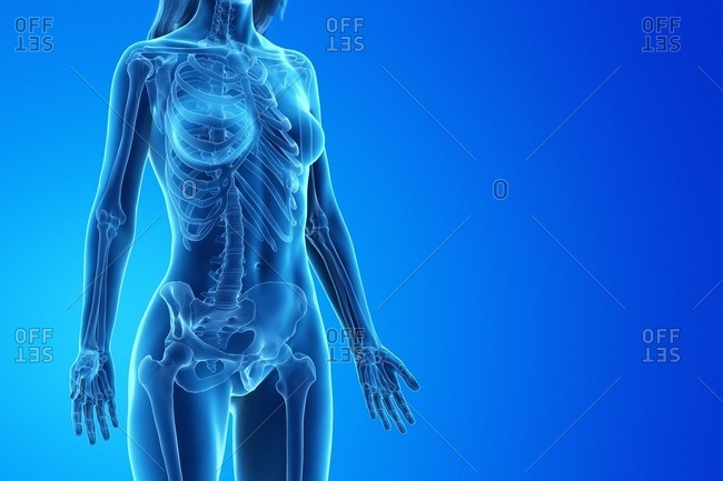 3d rendered medically accurate illustration of a woman's skeleton