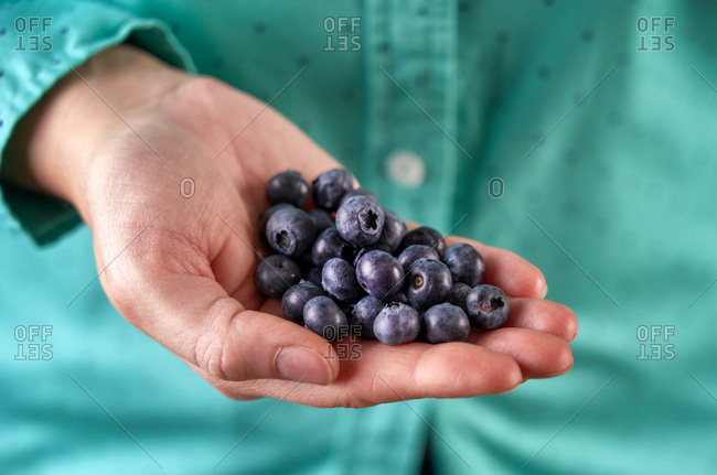 Close up portrait of hand of fresh blueberries.
