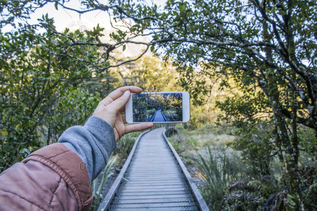 Cropped hand of woman photographing boardwalk amidst plants and trees in forest with smart phone