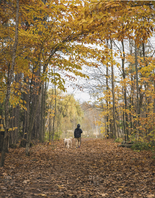 Rear view of boy with dog walking on fallen leaves in forest during autumn