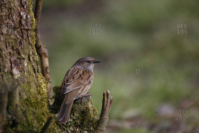 Close-up of sparrow perching on branch in forest