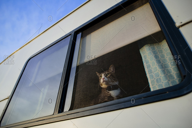 Low angle view of kitten looking through window while sitting in motor home seen through glass