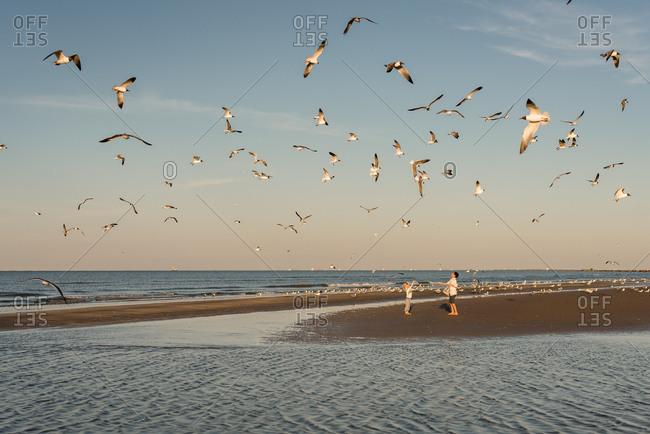 Kids feeding seagulls on a sunny day at the beach in Galveston, Texas