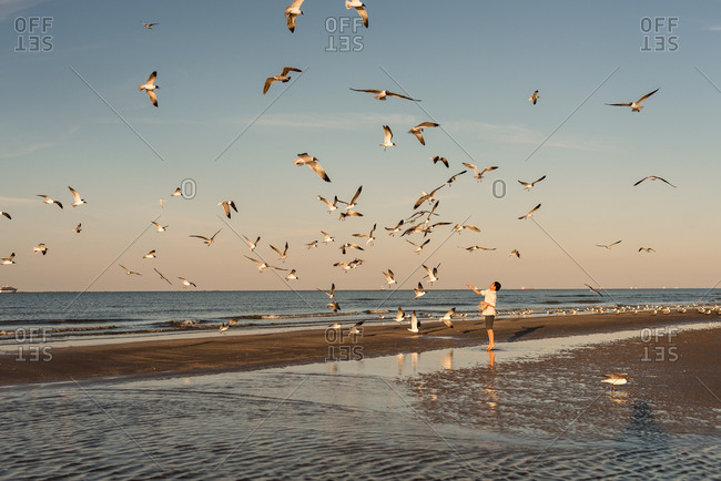 Boy feeding seagulls on beach on Galveston Island, Texas