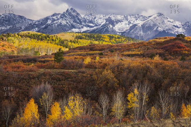 Bright Fall foliage in Colorado with snow covered mountains