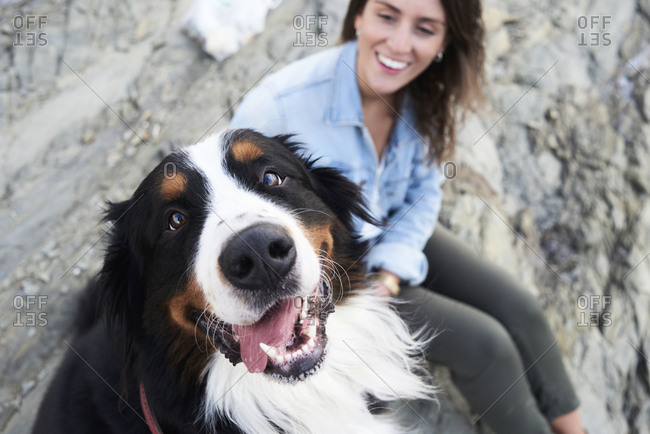 Happy bernese mountain dog looking at camera- his owner smiles next to him