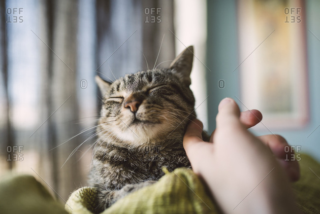 Hand of man stroking tabby cat