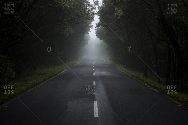 Empty country road in the fog