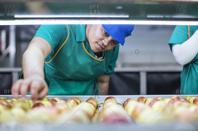 Female worker checking apples on conveyor belt in factory