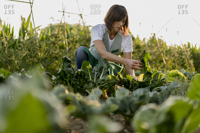Woman working in her vegetable garden