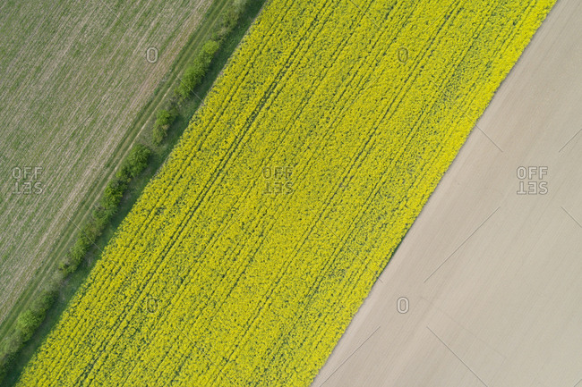 Abstract aerial view of agricultural fields- rape field- Franconia- Bavaria- Germany.