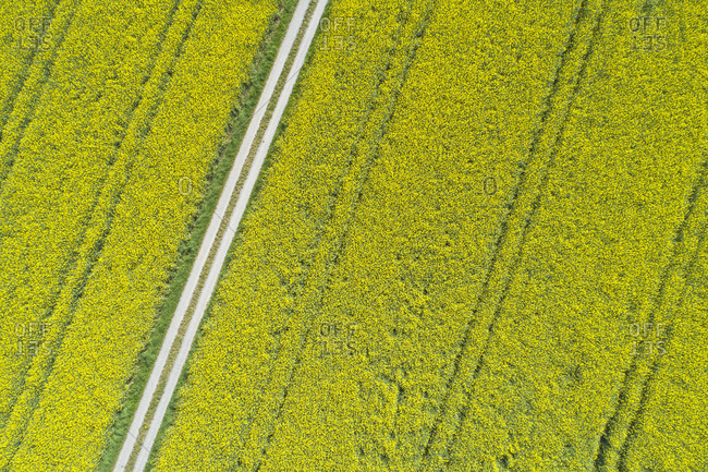 Aerial view of dirt road through oilseed rape agricultural fields- Franconia- Bavaria- Germany
