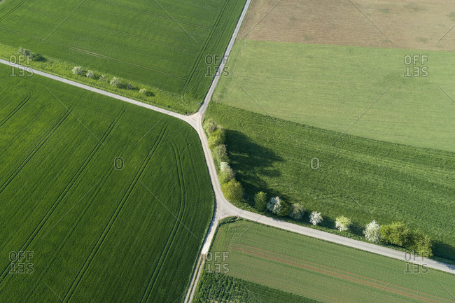 Aerial view of tree lined road with intersection through agricultural fields- Franconia- Bavaria- Germany