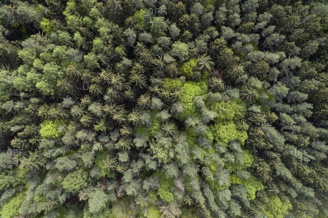 Aerial view of road through forest- springtime- Steigerwald- Franconia- Bavaria- Germany
