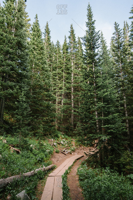 Beautiful Tree Covered Hiking Trail in Rocky Mountain National Park S