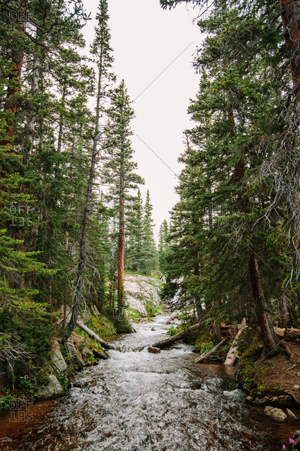 Beautiful Colorado Creek Surrounded by Trees and Rocky Terrain