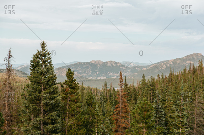 Beautiful Colorado Forest Views of Mountains and Trees