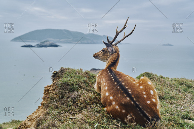 Axis Deer looking away while sitting on mountain by sea