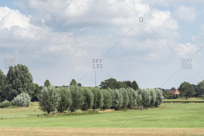 Trees growing in field on farmland under cloudy skies