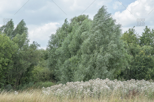 Fluffy plants growing in rural field by forest