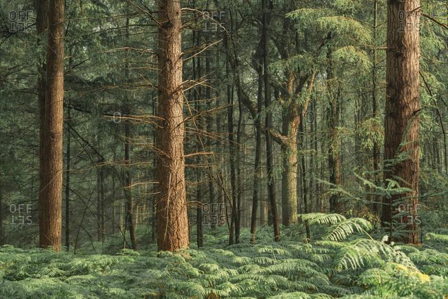 Fern plants growing on floor of forest