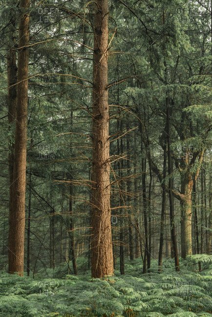 Fern plants surrounding trees on floor of forest