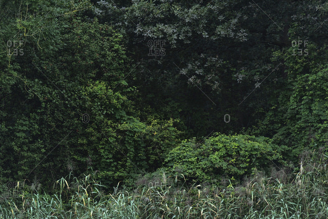Lush green plants growing in a dense forest