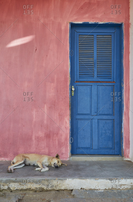 Dog sleeping on a porch, Tangara, Rio Grande do Norte, Brazil
