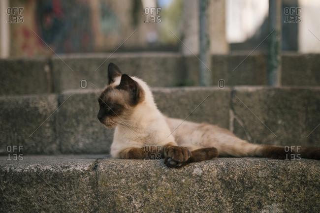 Cat lying on concrete stairs in the city