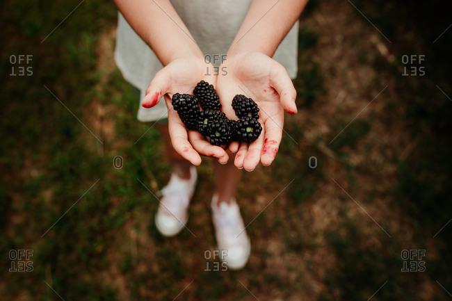 Child holding blackberries