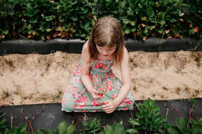 Girl picking strawberries in a garden