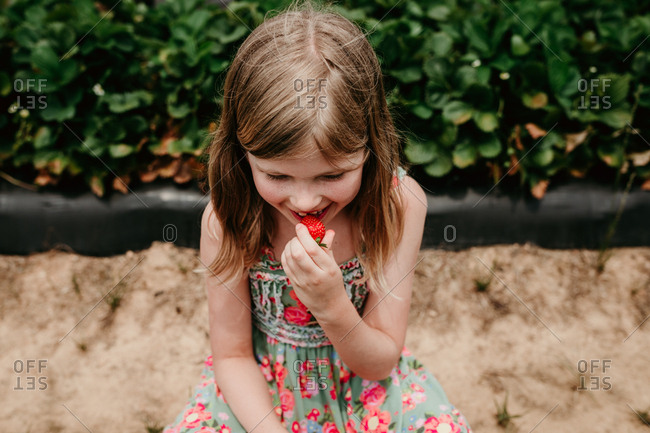 Girl eating a freshly picked strawberry