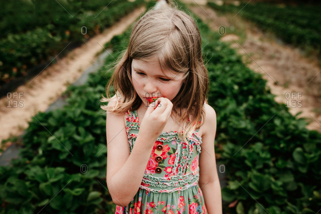Little blonde girl eating a freshly picked strawberry