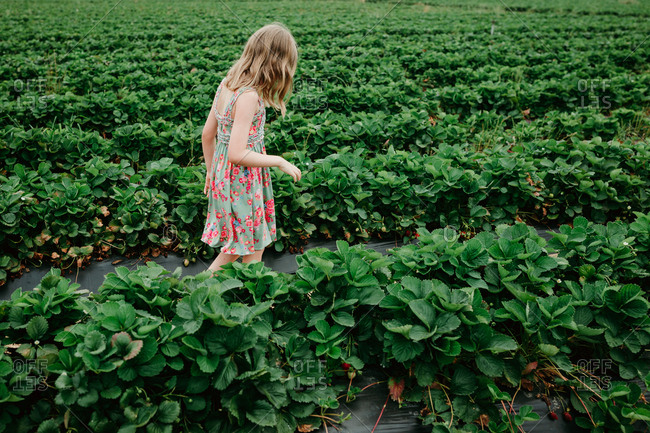 Blonde girl walking in a strawberry field