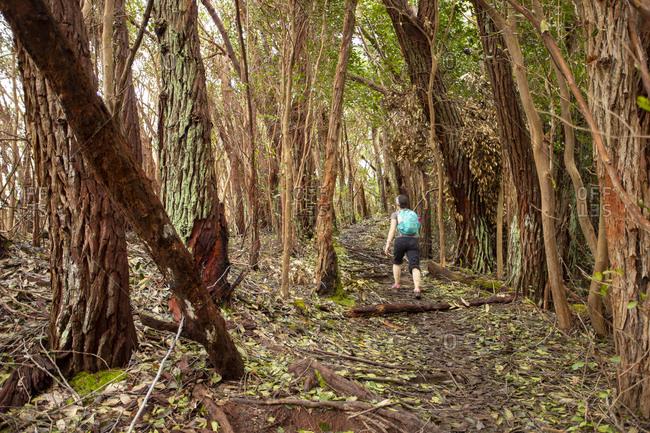 Hiking through Kauai forest amid tree trunks, Kauai