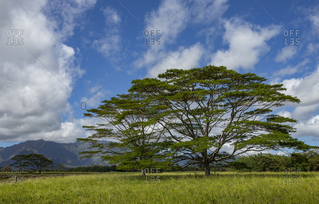 Ranch land with mountain backdrop, Kauai
