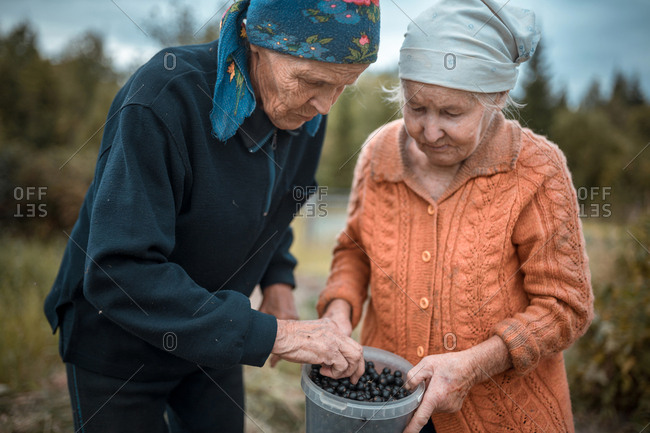 Two old women picked currant berries at garden and now examining them