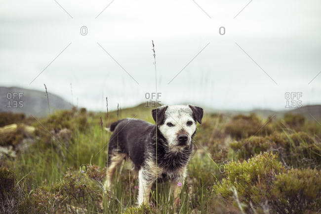 Dog sit fly fishing by loch in remote mountains in Scotland