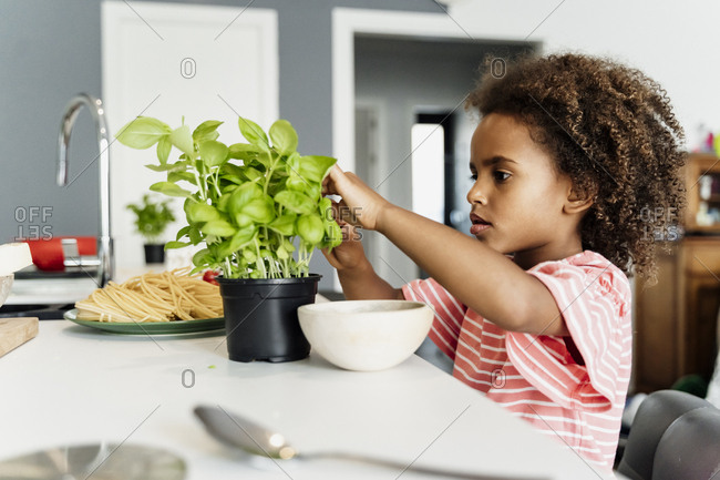 Girl plucking basil leaves in kitchen