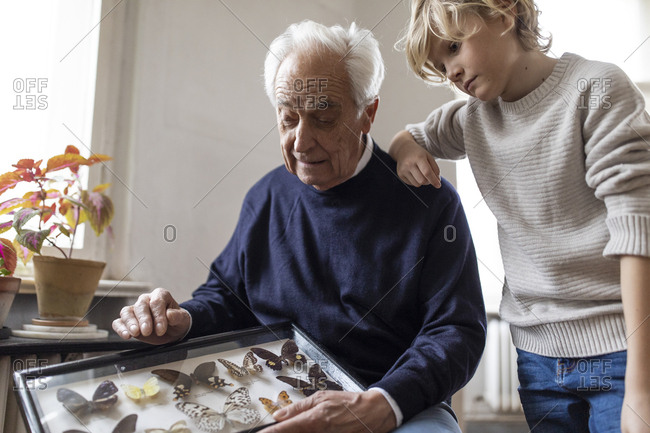 Grandfather showing butterfly collection to grandson at home