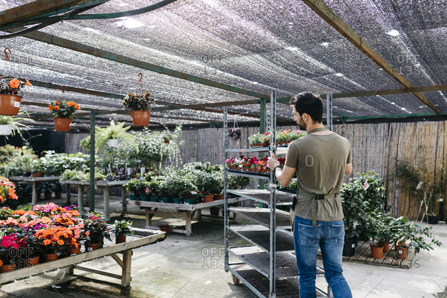 Worker in a garden center pushing a cart with plants