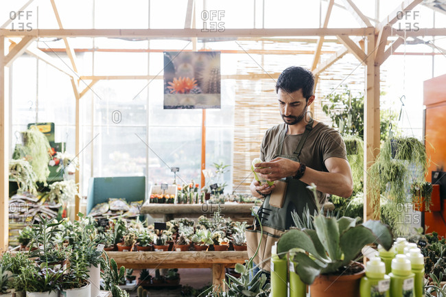 Worker in a garden center holding a maintenance product for cacti